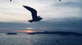 Istanbul Interregnum